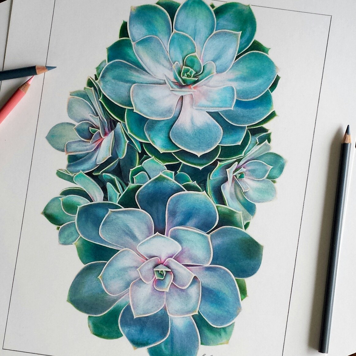 1161x1161 Succulent Drawing Original Illustrators, Draw And Paper Size
