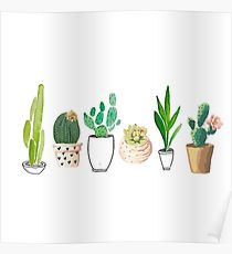 210x230 Succulent Drawing Posters Redbubble