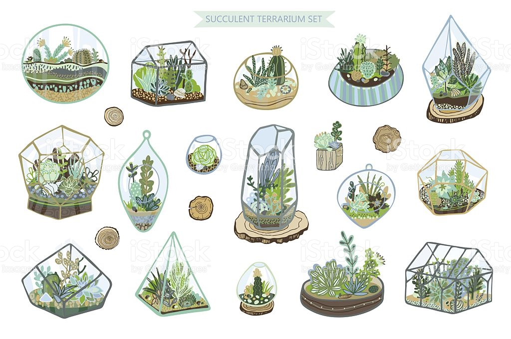 1024x681 Succulent Cactus Terrarium Vector Color Hand Drawing Set