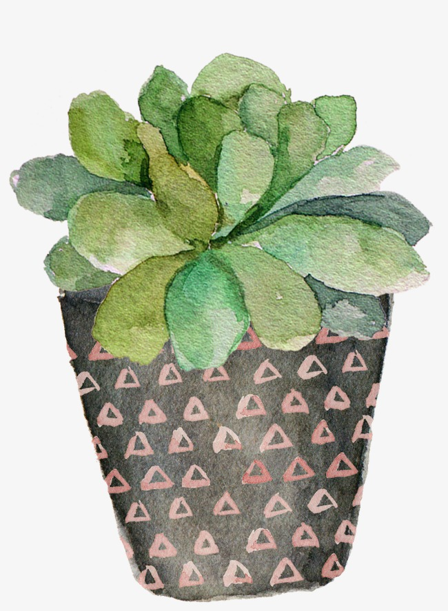 650x887 Drawing Green Potted Succulents, Watercolor Green, Succulent