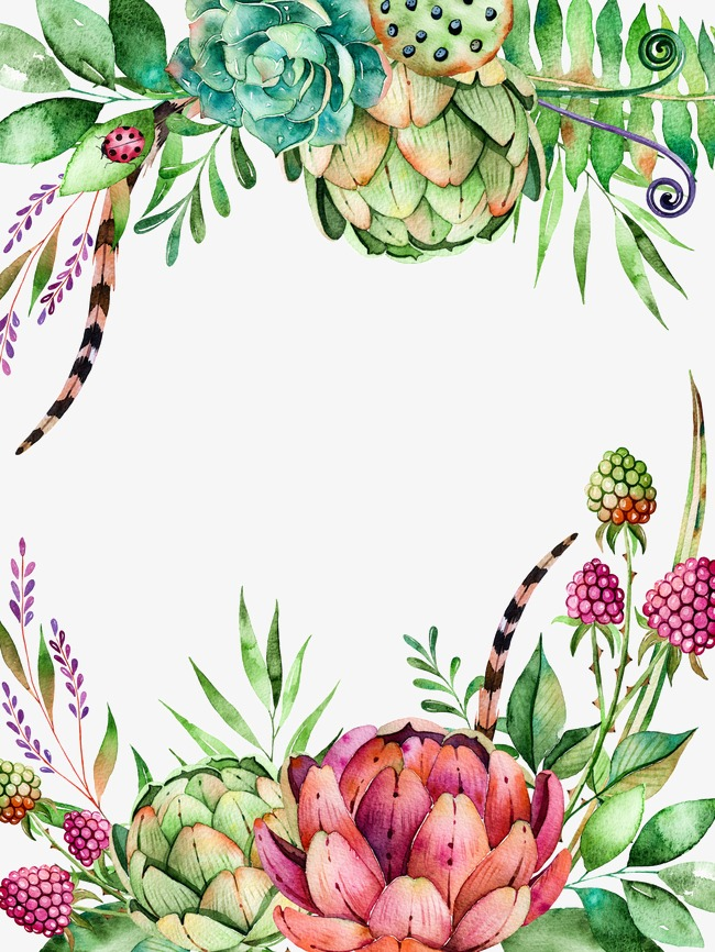 650x866 Fleshy Shading, Leaves, Succulents, Drawing Plant Png Image