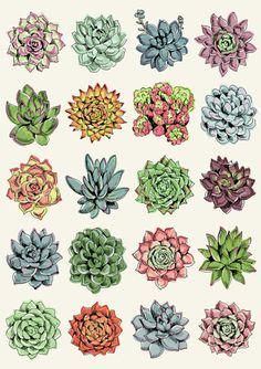236x334 Hand Drawn Line Succulent Plant Isolated On White Background