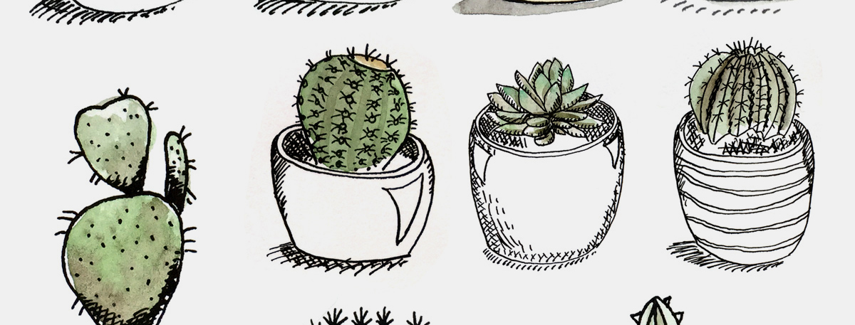 1200x457 Sketches Of Potted Succulents Amy Lamp