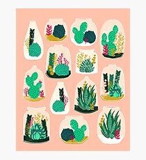 210x230 Succulent Drawing Photographic Prints Redbubble