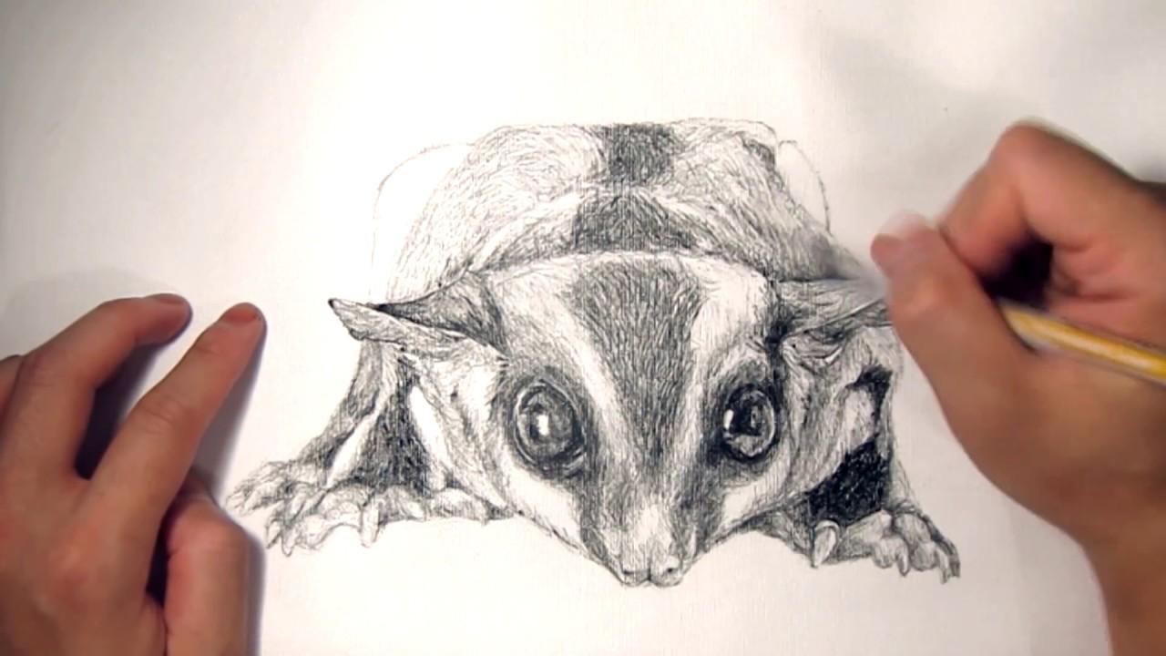 1280x720 Franfranmaster Speed Drawing Animal Portrait 06