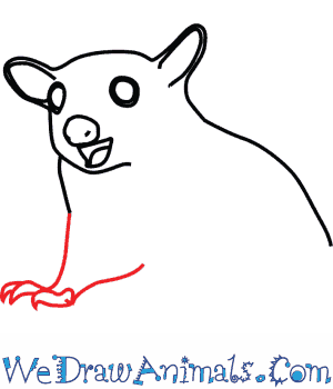 300x350 How To Draw A Sugar Glider