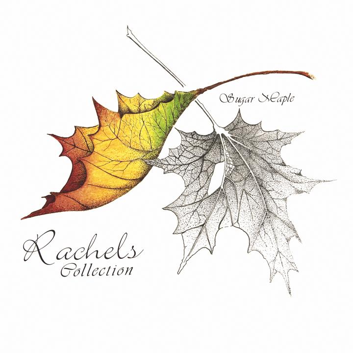 720x720 Rachel's Collection Sugar Maples William Kleinedler Studio