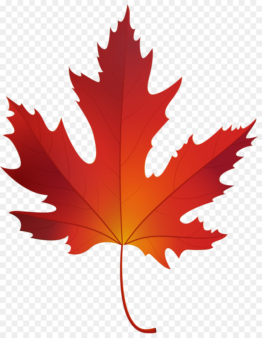 900x1160 Red Maple Sugar Maple Maple Leaf Clip Art