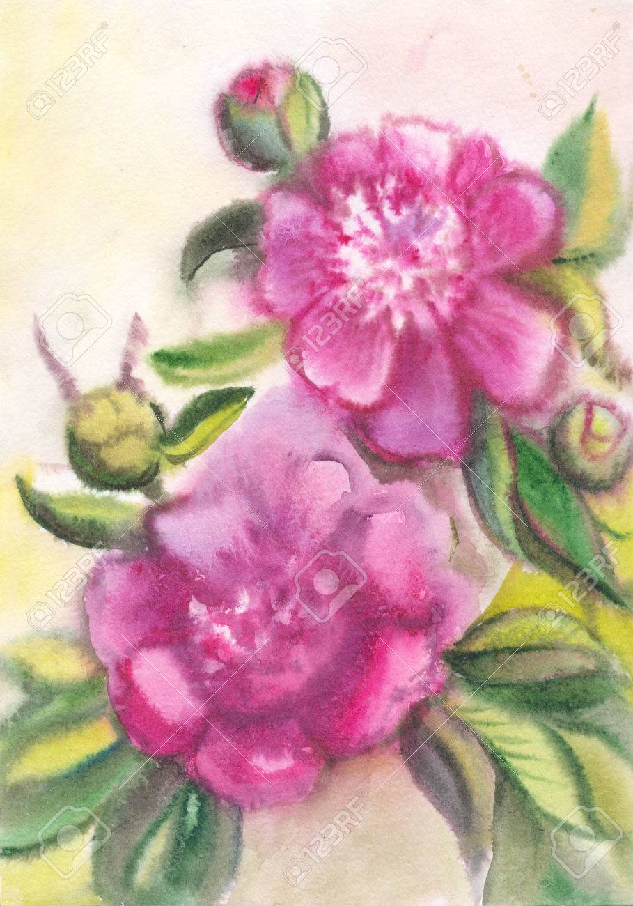 909x1300 Violet Peonies. Drawing On Raw Paper. Watercolor Purple Summer
