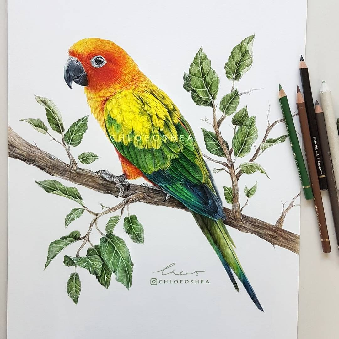 1080x1080 Hi, Its Been A While! Finally My Drawing Of My Sun Conure Hugo