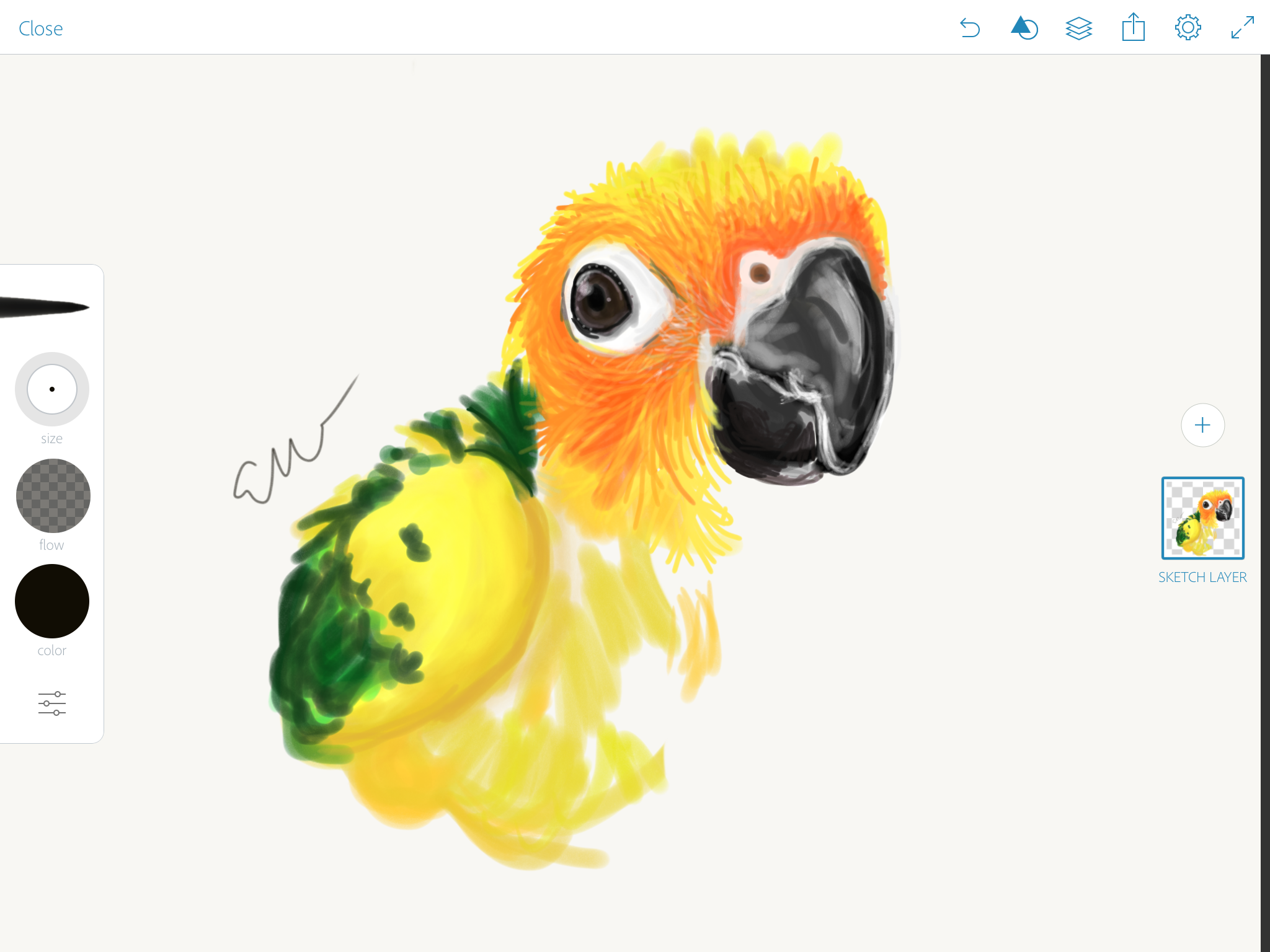 2048x1536 So I'M Drawing A Baby Sun Conure Any Thoughts Or Tips I Can