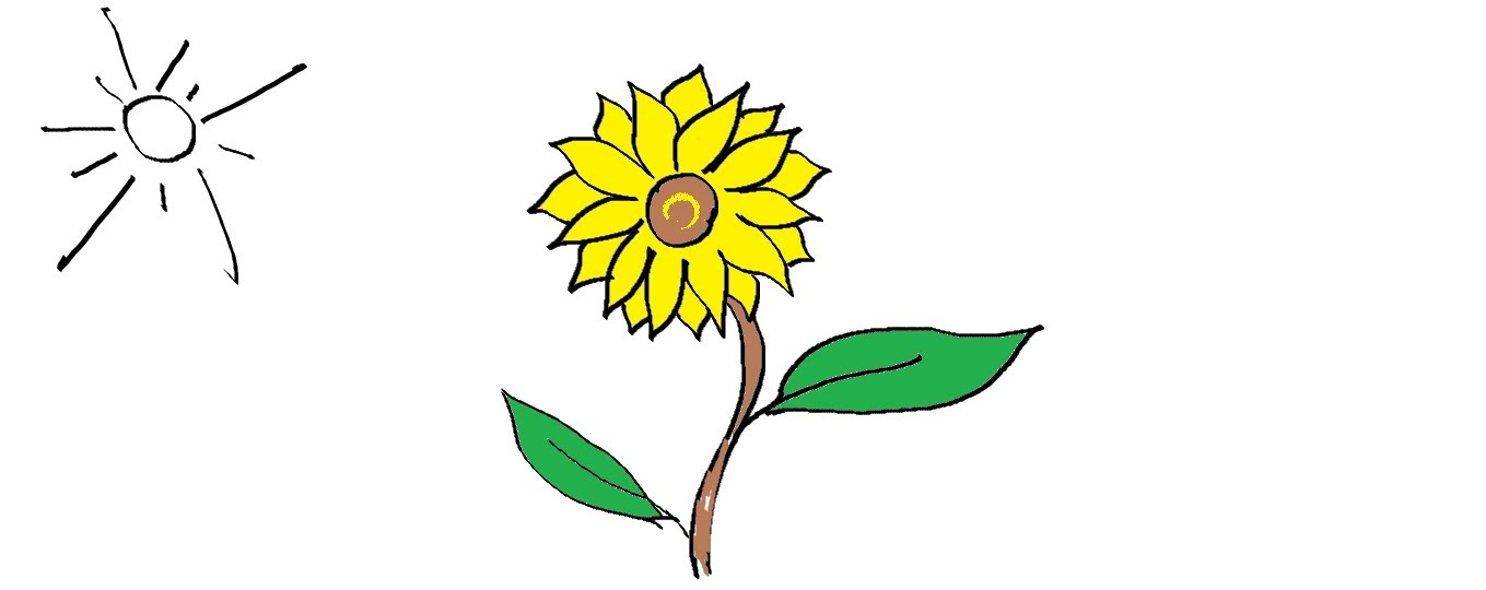 1359x540 Easy Kids Drawing Lessons How To Draw A Flower Sunflower Easy