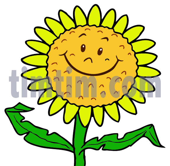 575x562 Free Drawing Of A Sunflower Face From The Category Climate
