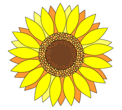 250x226 How To Draw Sunflowers
