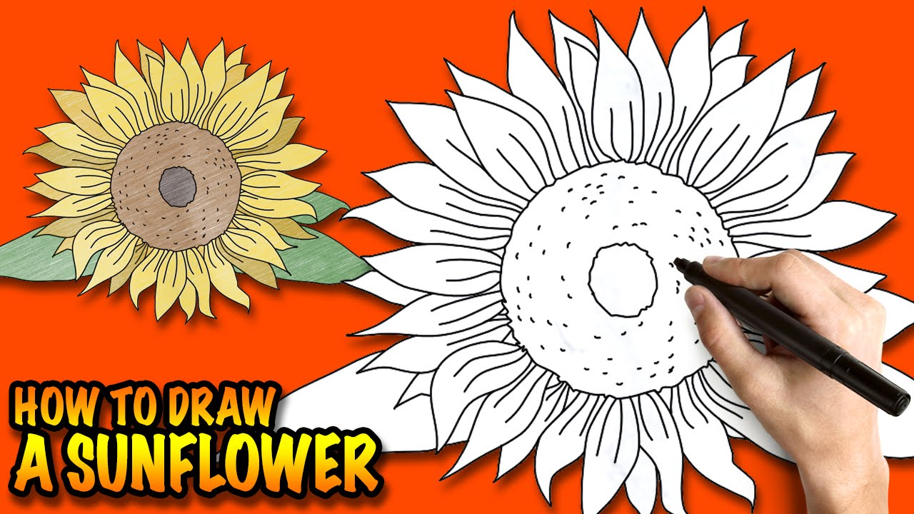 1280x720 How To Draw A Sunflower