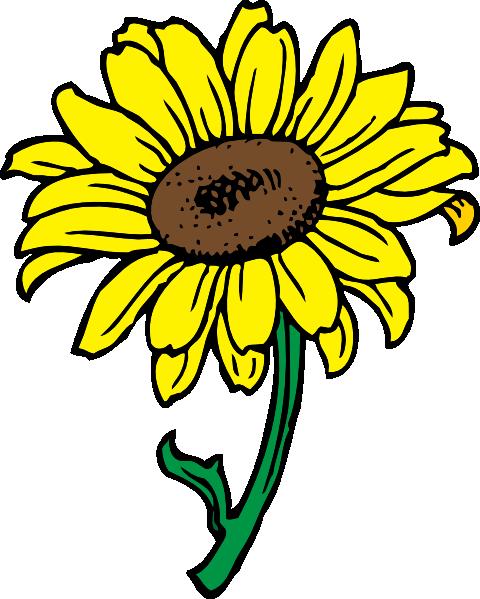 480x599 Sunflower Clip Art