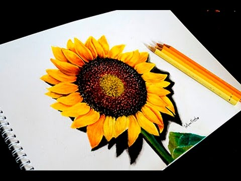 Sunflower Drawing Color At Getdrawings Com Free For Personal Use