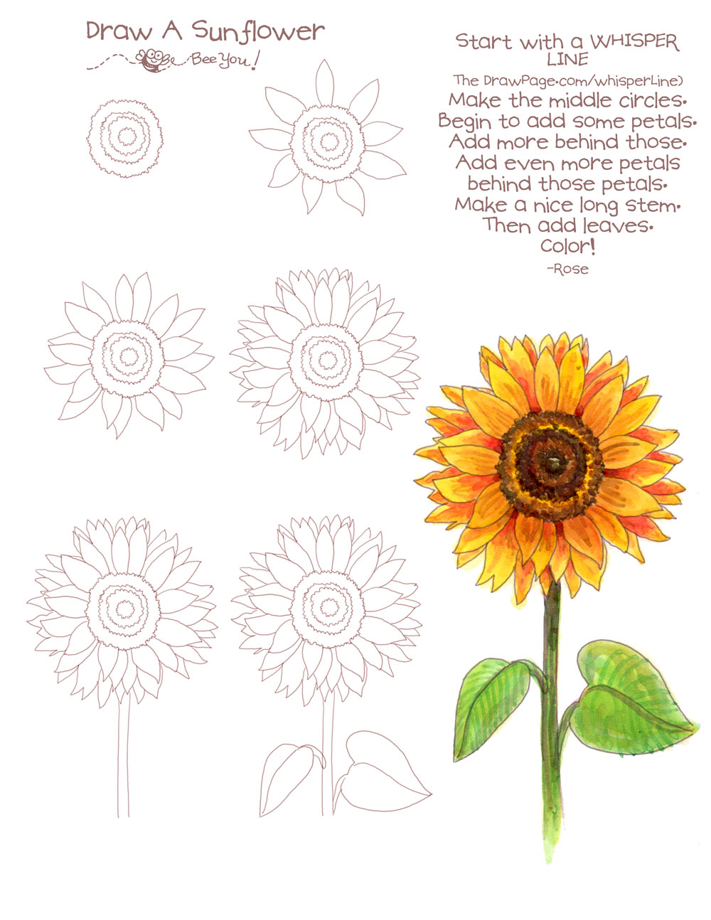 1000x1294 Drawing A Sunflower