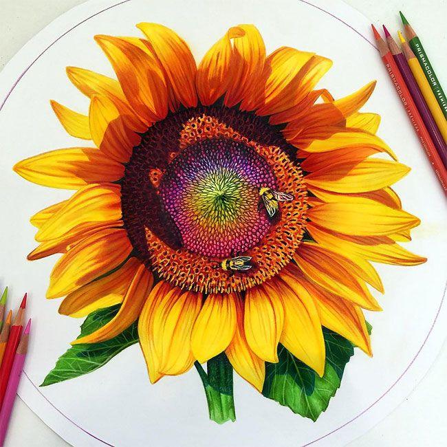 650x650 Os Maravilhosos Desenhos Coloridos De Morgan Davidson Landscaping