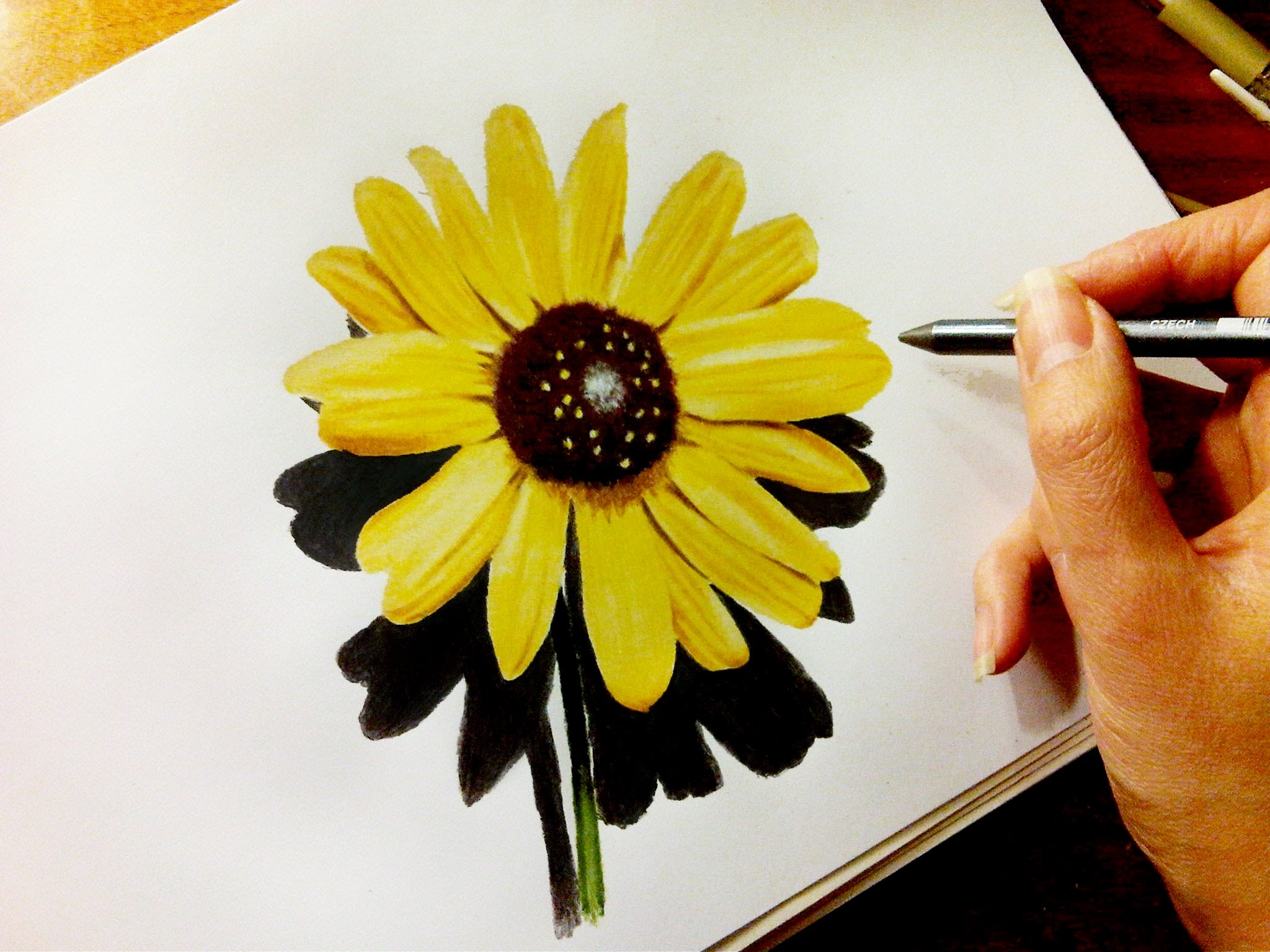 Sunflower Line Drawing : Sunflower drawing easy at getdrawings.com free for personal use