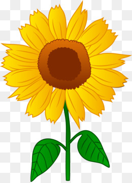 sunflower drawing images free at getdrawings com free for personal rh getdrawings com sunflower clipart design free sunflower clip art free images