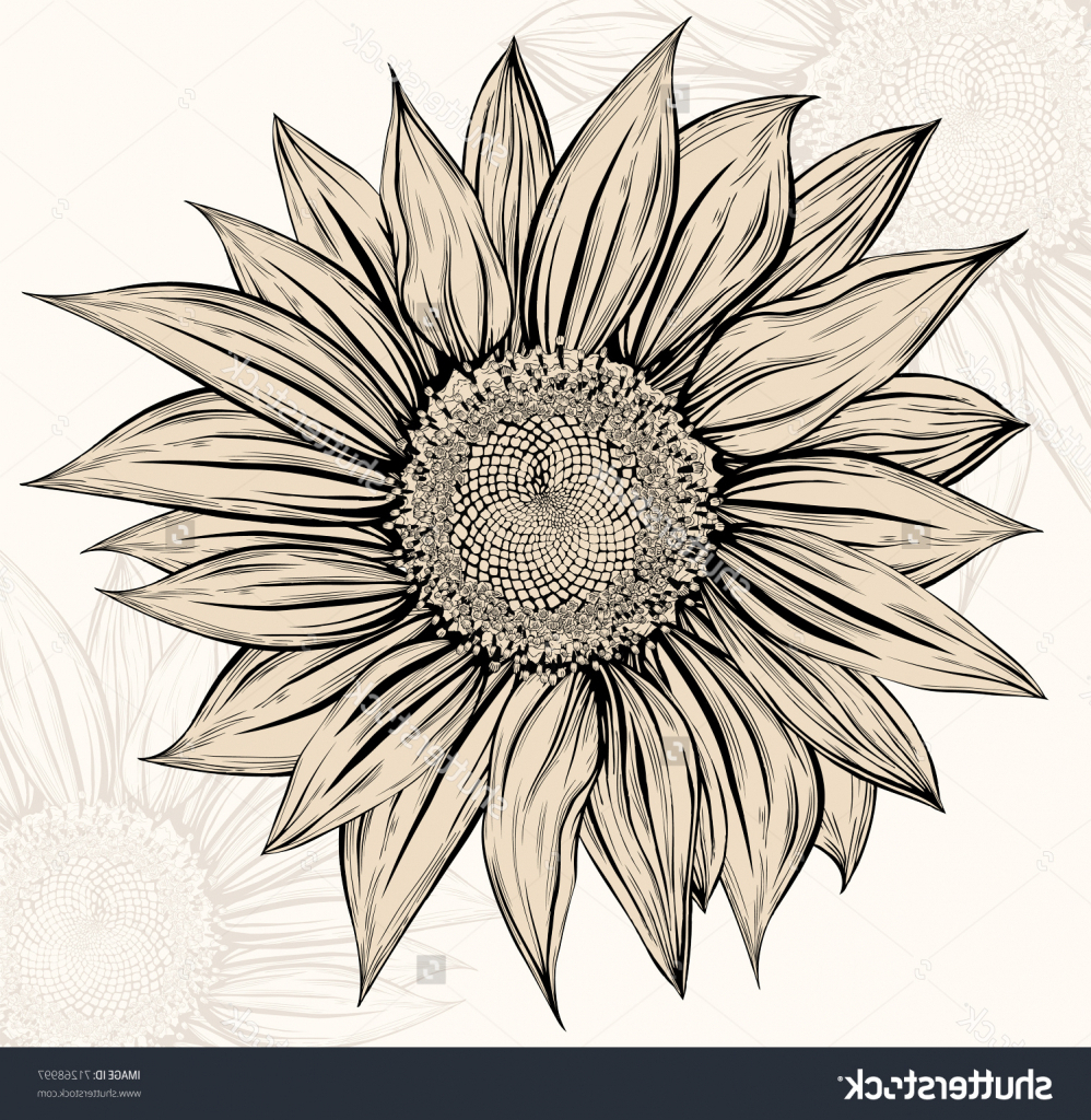 sunflower drawing images free at getdrawings com free for personal