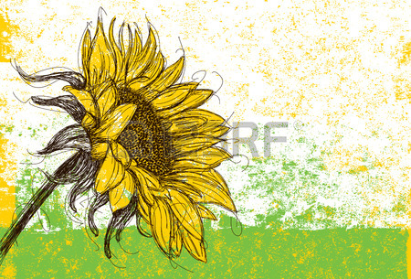 Sunflower Line Drawing : Sunflower drawing images free at getdrawings.com for personal