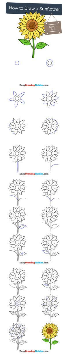 236x1221 How To Draw A Sunflower Sunflowers, Drawings And Tutorials