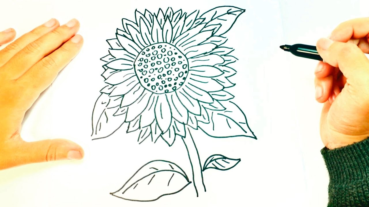 1280x720 How To Draw A Sunflower Sunflower Easy Draw Tutorial