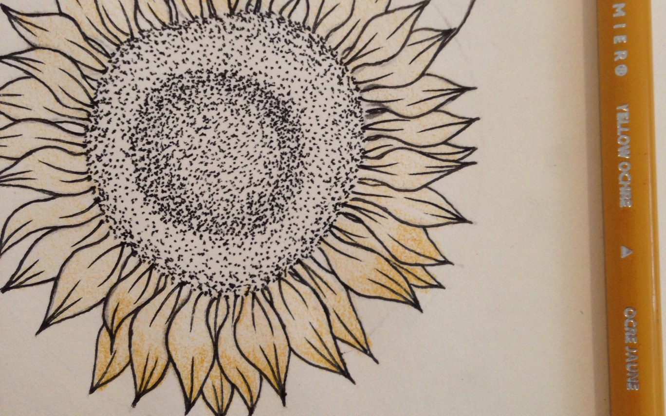 1368x855 Sunflower Drawing Gardening Flower And Vegetables