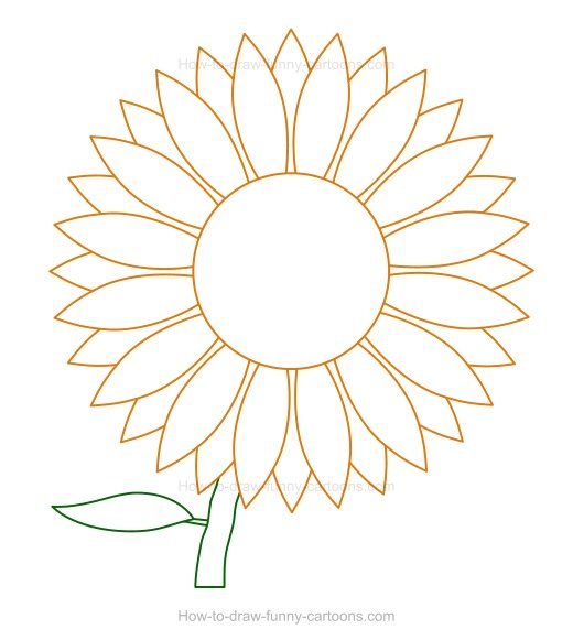 520x581 To Draw A Sunflower