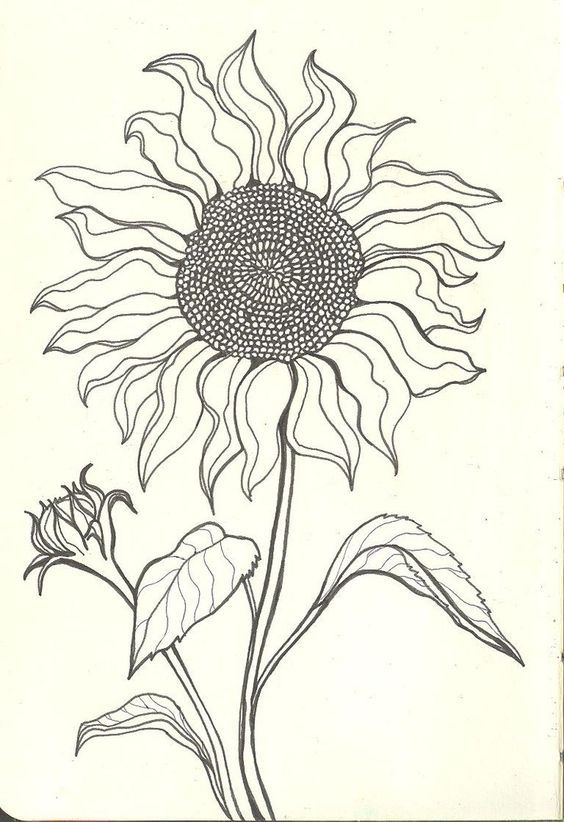 564x822 Sunflower Drawings Sunflower Drawing Tumblr Sad Sunflower By