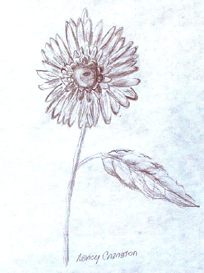 405x541 sunflower a pencil drawing by nancy cranston the virtual