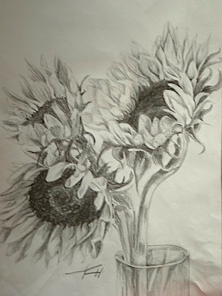 456x609 sunflower pencil drawing