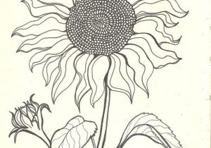 300x210 Drawings Of Sunflowers
