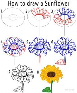 250x300 How To Draw A Sunflower Step By Step Skateboard