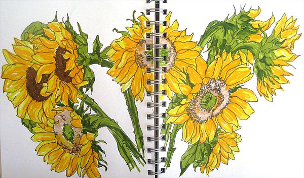 600x353 More Sunflowers Sketch Away Travels With My Sketchbook