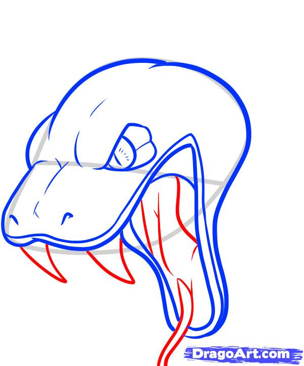 600x722 How To Draw A Snake Head, Draw Snake Heads Step 10 Snake