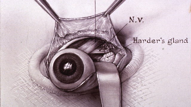 640x360 Surgical Art The Scientist