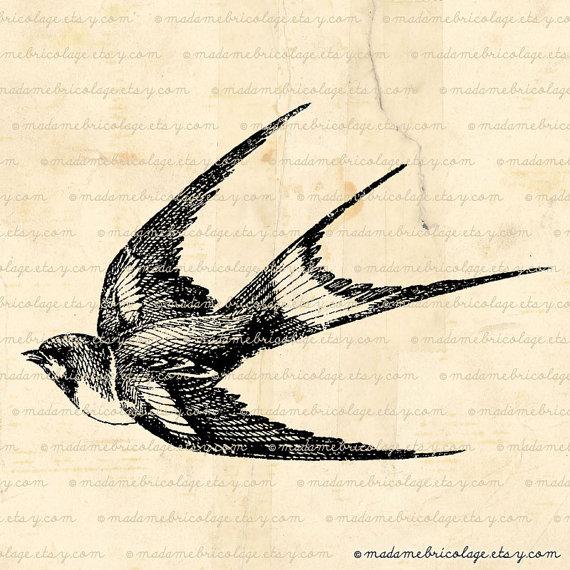 570x570 Flying Swallow, Bird