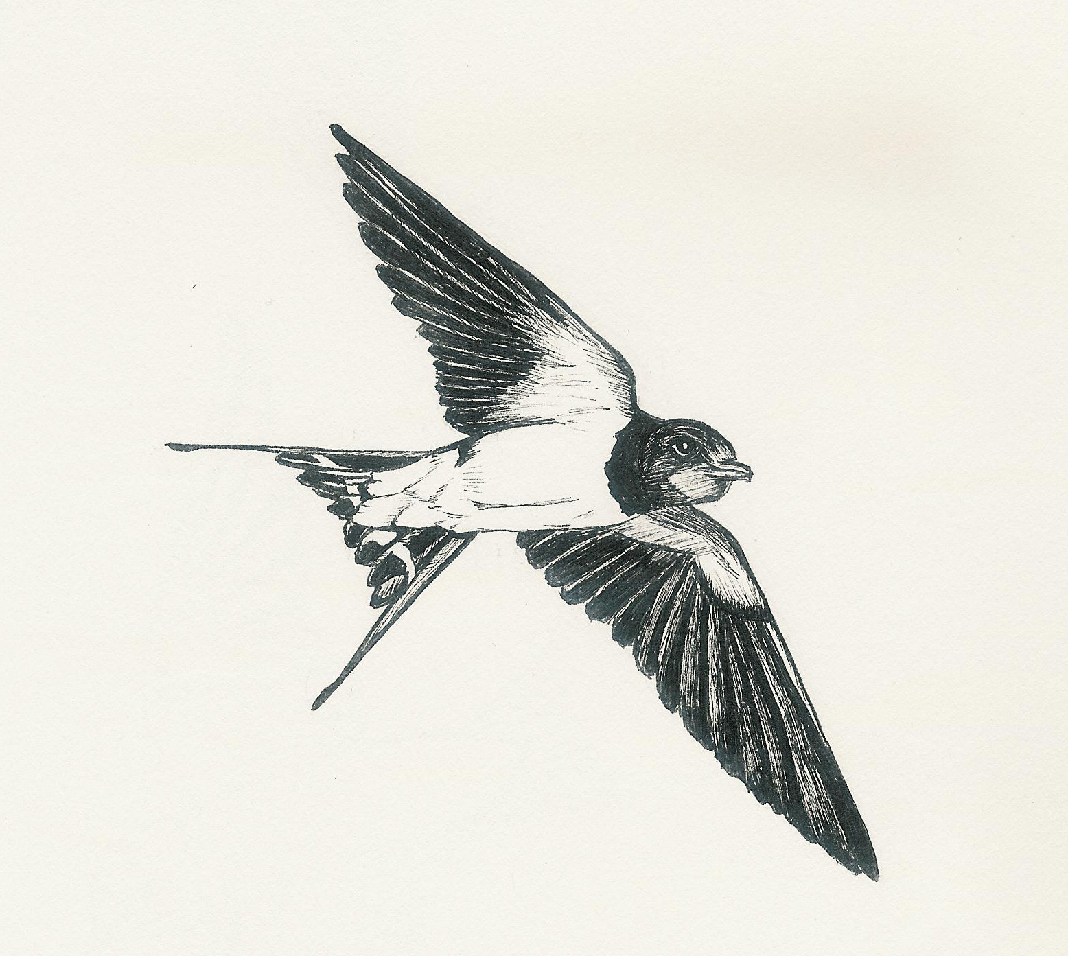 how to draw a flying bird easily