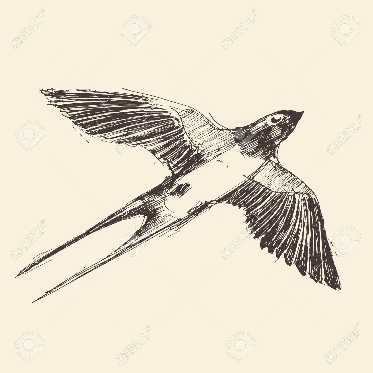 1300x1300 Swallow Bird Hand Drawn Vintage Engraved Illustration, Sketch