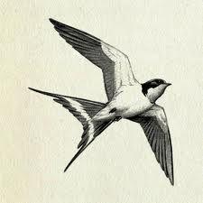 225x225 Bird Illustration