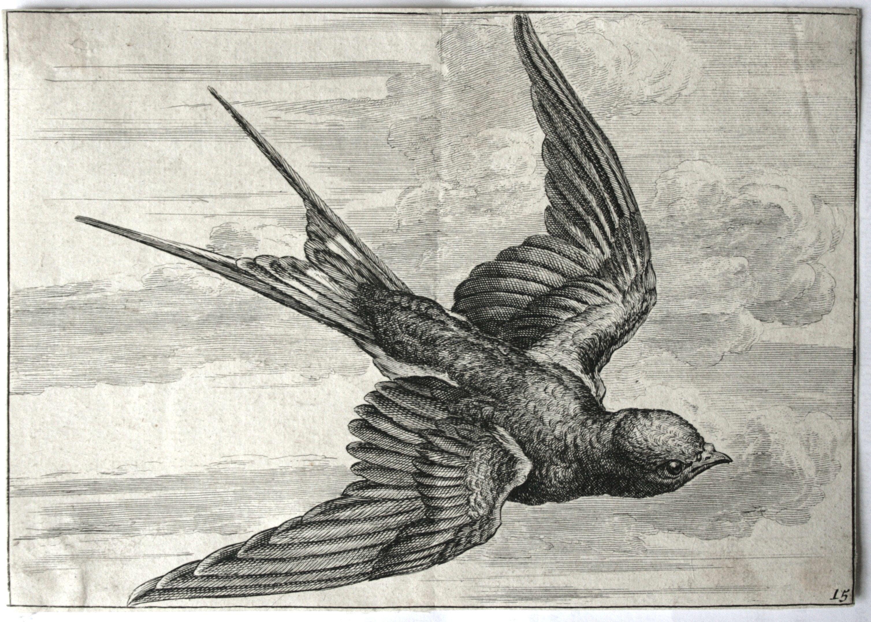 3016x2153 Swallow Draw