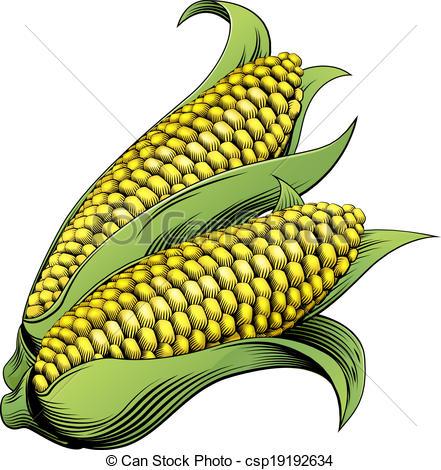441x470 Corn Vintage Woodcut Illustration. A Sweet Corn Maize Vectors