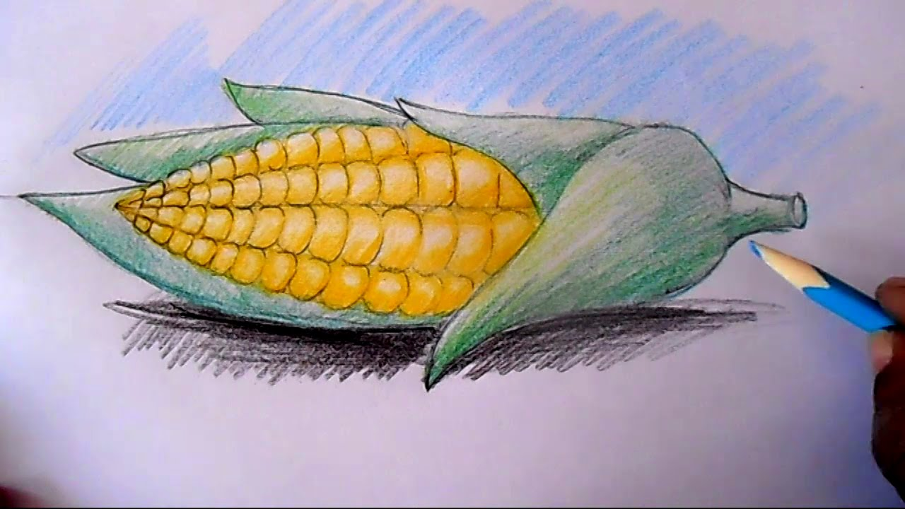 1280x720 How To Draw Corn Cob Step By Step