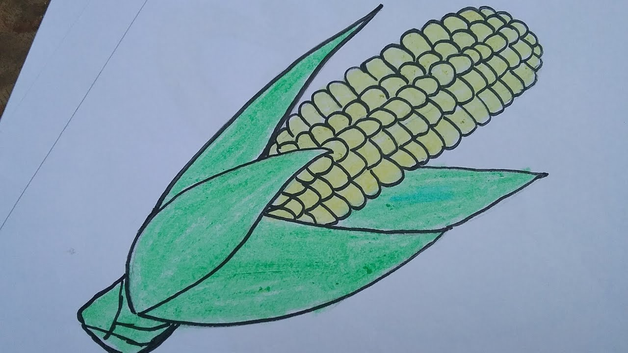 1280x720 How To Draw A Corn With Basic Shapes,drawing And Colouring