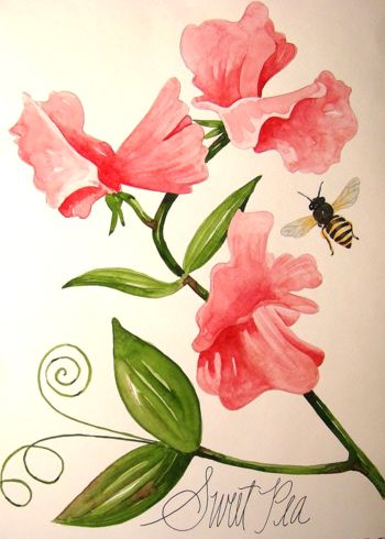 350x490 Sweet Pea Flowers Pictures