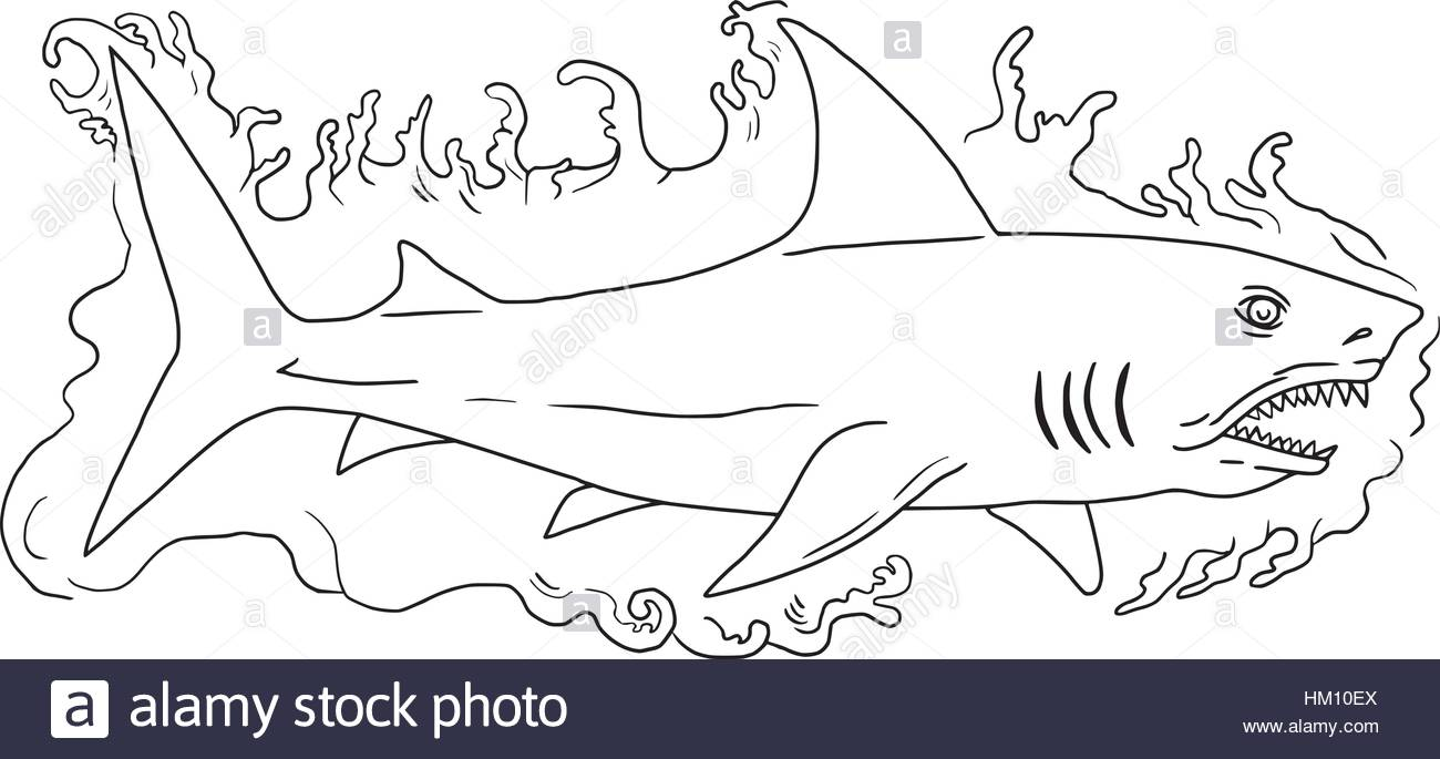 1300x685 Drawing Sketch Style Illustration Of A Shark Swimming In Water