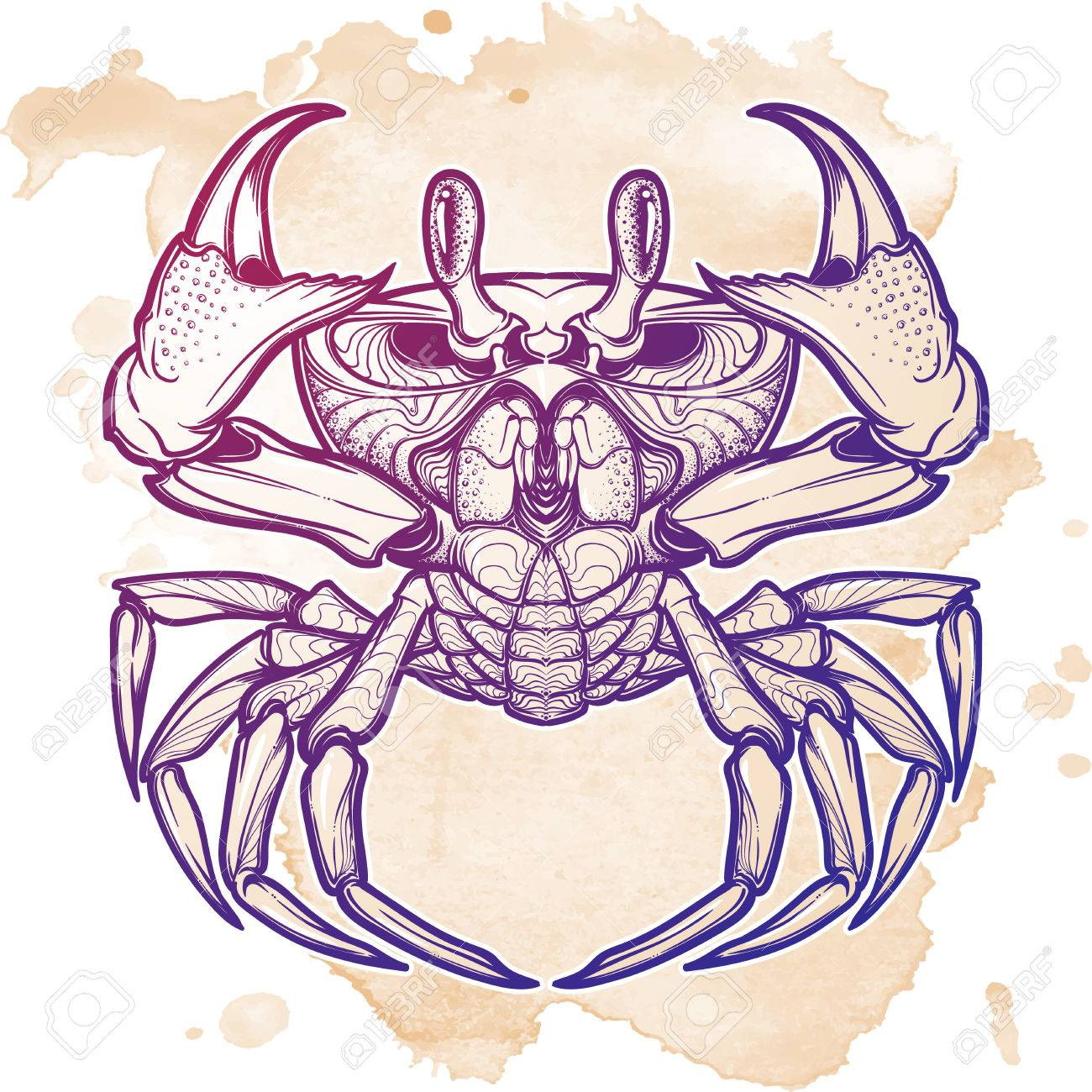 1300x1300 Cancer. Accurate Symmetrical Drawing Of The Beach Crab. Stock